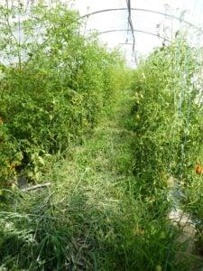Organic farming Lavancia 22_2_1