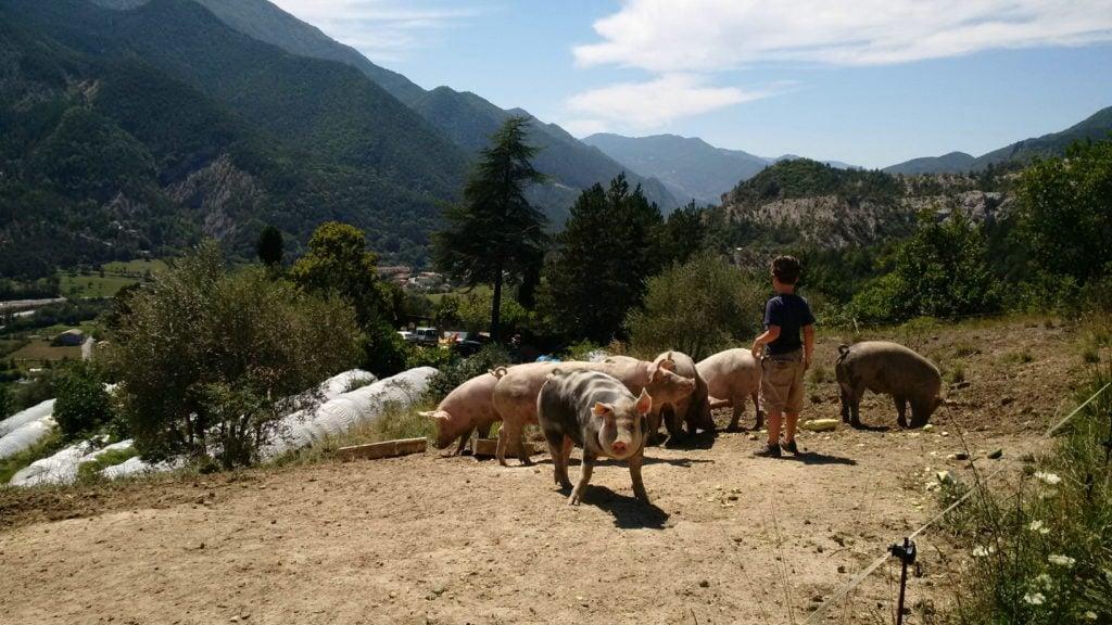 Organic farming Lavancia 7_5_1