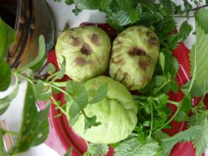 unusual fruits and vegetables Cherimoya & Chayote