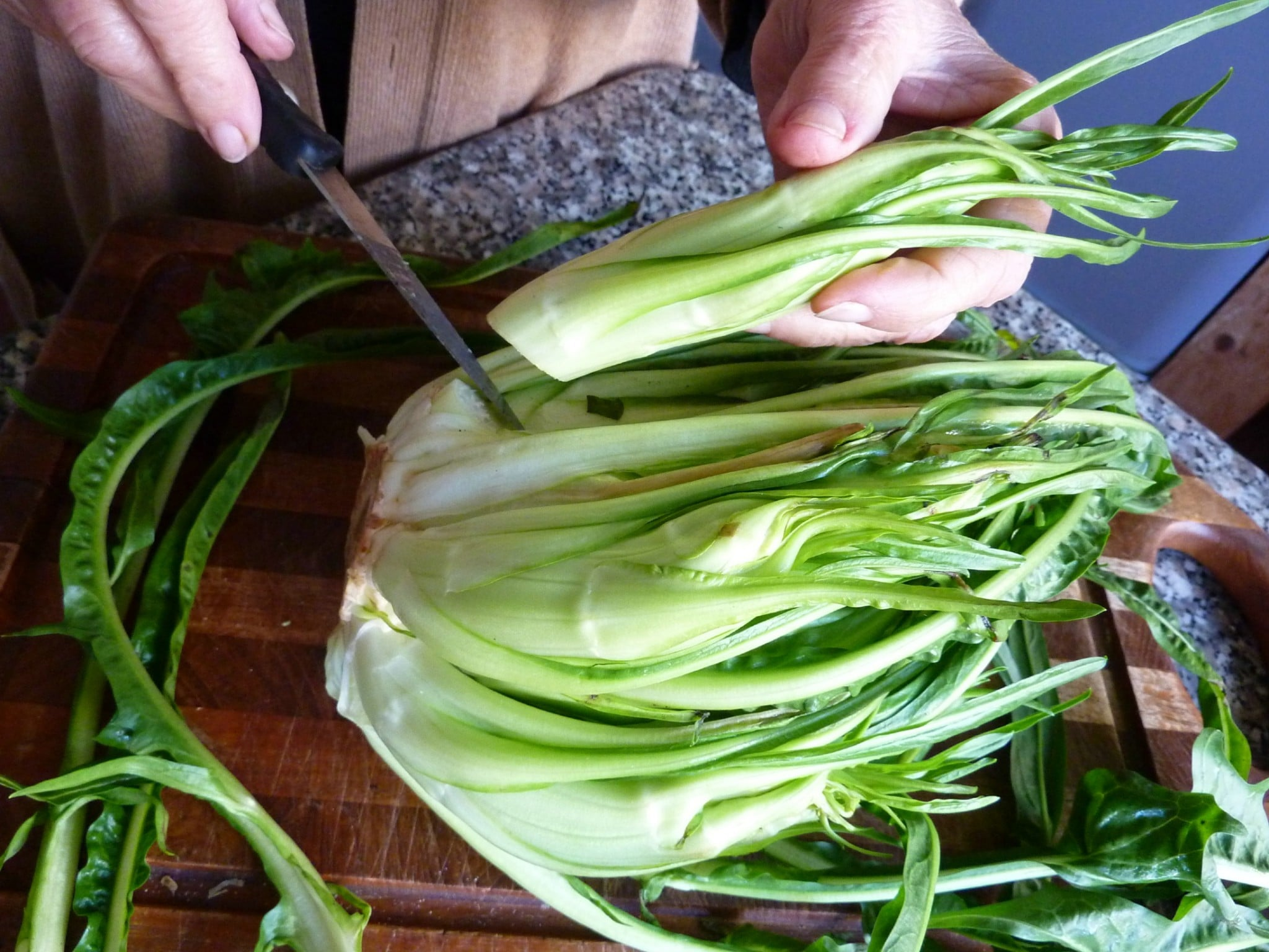 Puntarelle chicory
