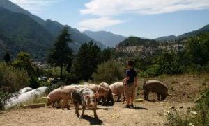 Organic farming Lavancia 7_3_1_1