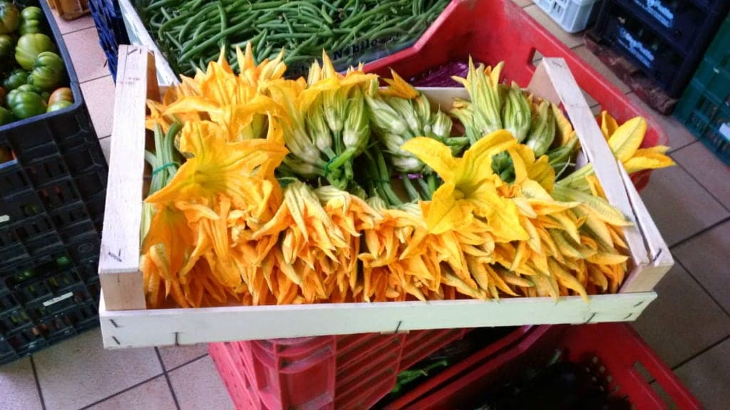 Fresh courgette flower