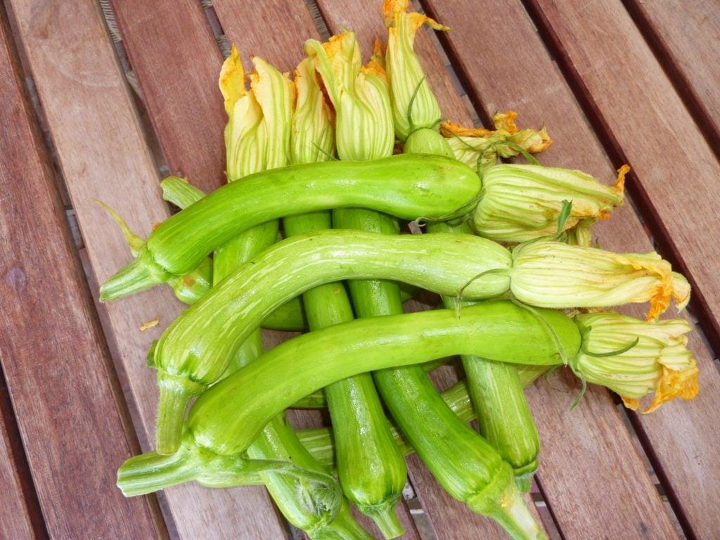 zucchini trombetta from Albenga 3_2_1
