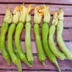Zucchini trombetta Albenga
