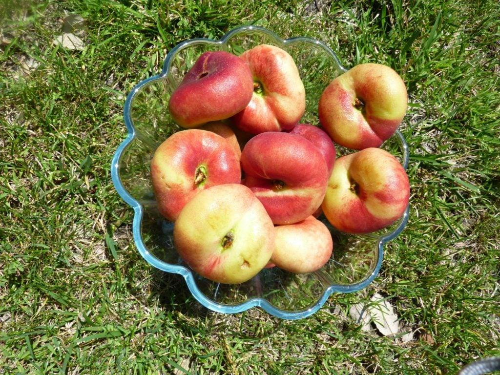 flat-peaches_1_1