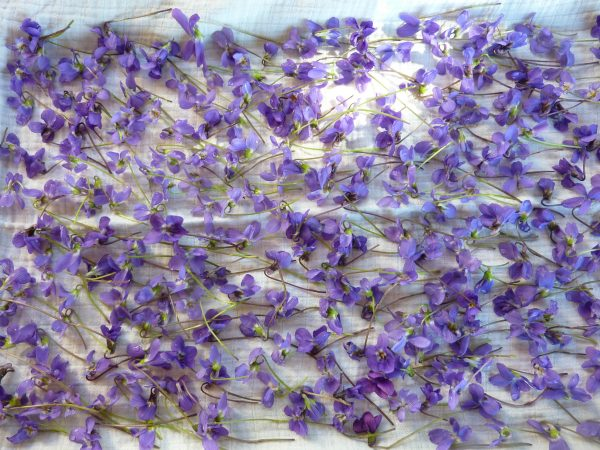 cleaning crystallized violets recipe
