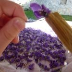 brushing homemade crystallized violets recipe