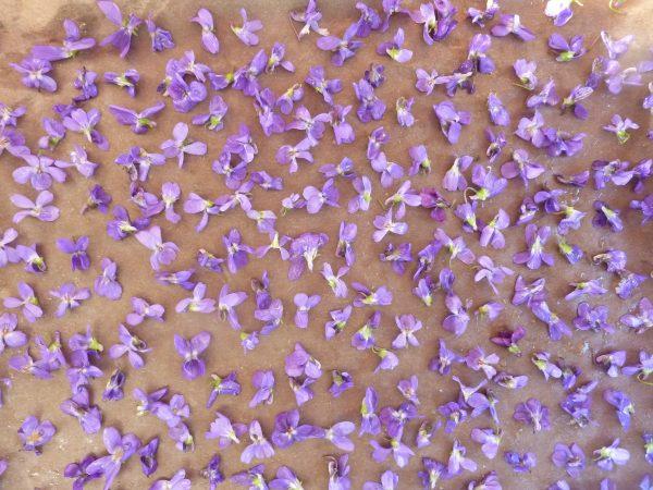 preparing homemade crystallized violets recipe