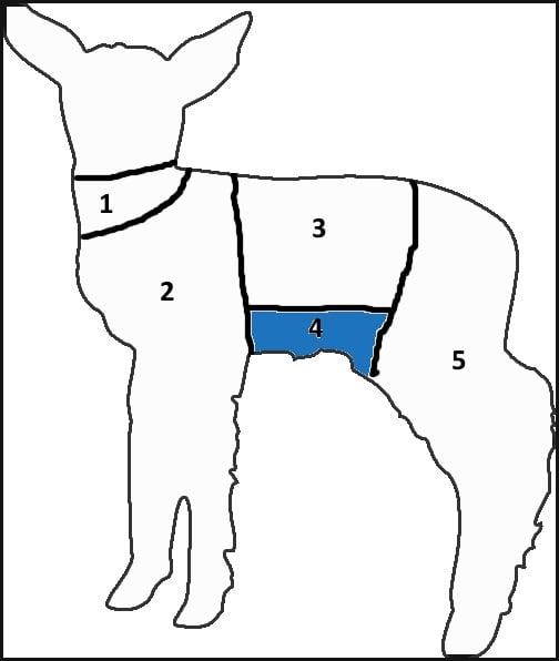 Lamb chart breast