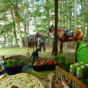 mediteranean picnic with horses and dogs