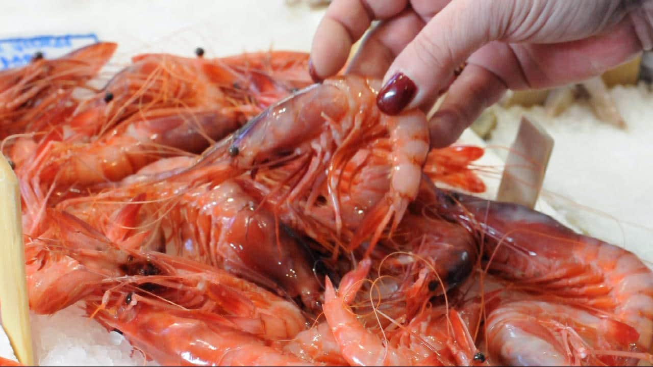Hand picking up San Remo prawns