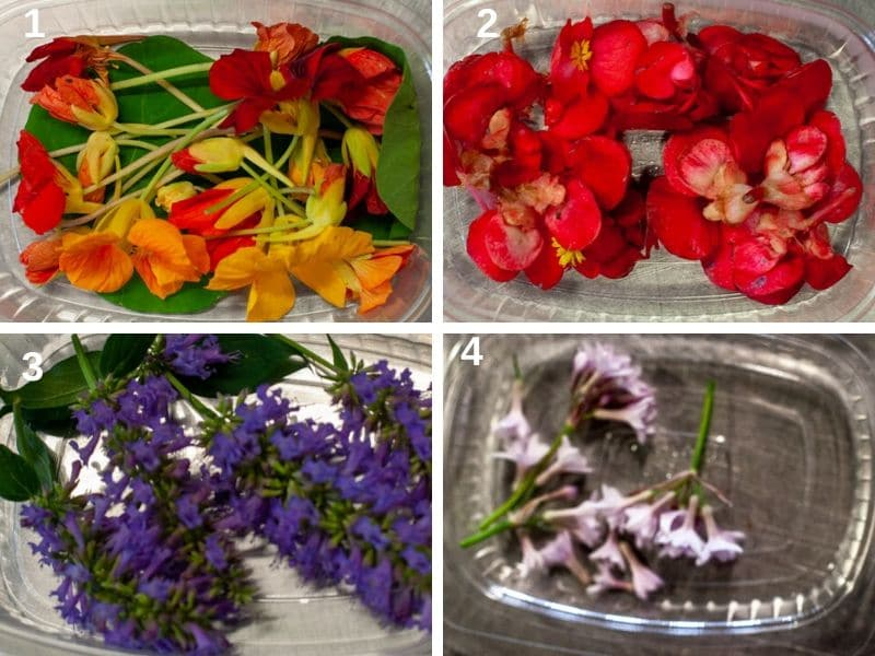 Edible flowers: capucines, begonia, agastache, tulbaghia