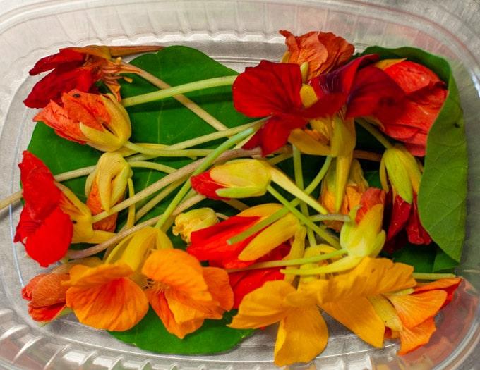edible flowers Capucines