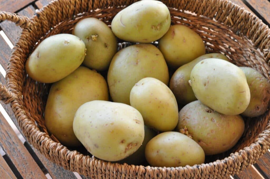 potatoes for gnocchi